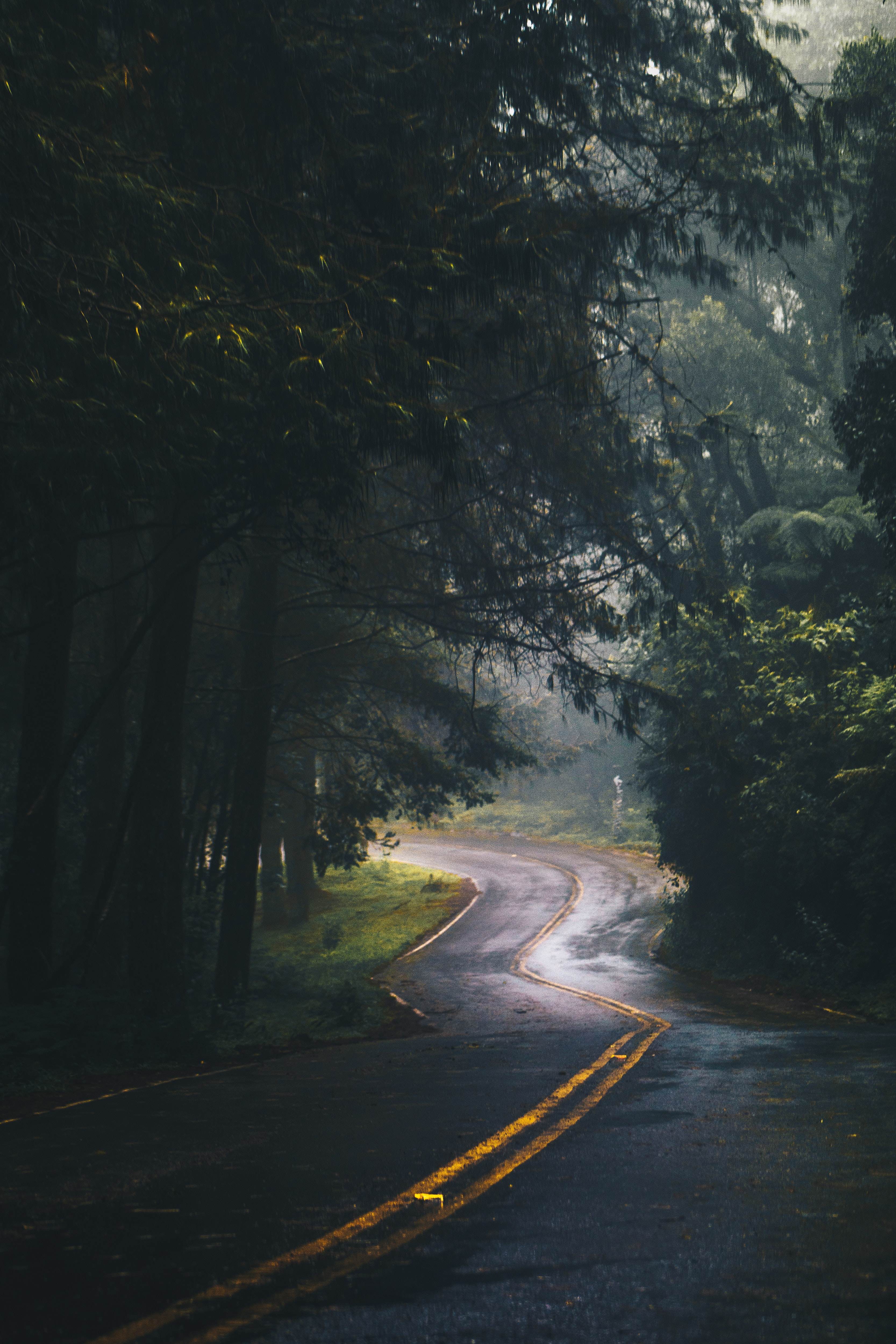 landscape-photography-of-road-and-forest-775203